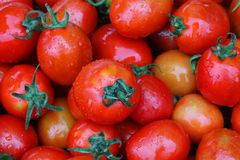 Fresh and wet red cherry tomato in garden. Close up fresh and wet red cherry tomato in garden Stock Images
