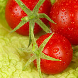 Fresh and wet tomatoes Royalty Free Stock Photography