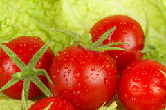 Fresh and wet tomatoes Stock Images