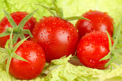 Fresh and wet tomatoes Royalty Free Stock Image