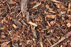 Fresh wet wood chip from pine tree Stock Image