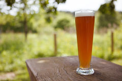 Fresh Wheat Beer Stock Photography