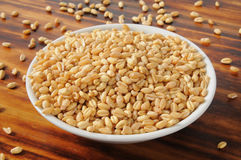 Fresh wheat kernels Royalty Free Stock Images