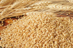 Fresh wheat kernels Royalty Free Stock Photos