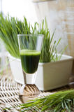 Fresh wheatgrass with wheatgrass juice. Shot Royalty Free Stock Photo