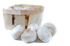 Fresh white agaricus or button mushrooms Stock Images