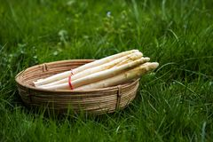 Fresh white asparagus in a basket outdoors in the grass, copy sp. Ace, selective focus, narrow depth of field Royalty Free Stock Images