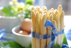 fresh white asparagus Royalty Free Stock Image