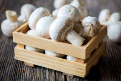 Fresh  white button mushrooms Royalty Free Stock Photography