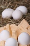 Fresh white chicken eggs in a tray and a hay closeup. Vertical Royalty Free Stock Images