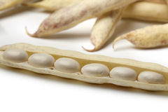Fresh white coco beans Royalty Free Stock Photo