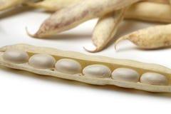 Fresh white coco beans. On white background Royalty Free Stock Photo