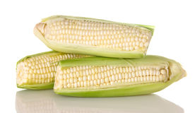 Fresh White Corn on the Cob. Three ears of fresh white corn on the cob Royalty Free Stock Photos