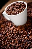 Fresh white cup of hot brazilian coffee beans Stock Image