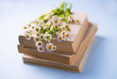Fresh white daisies on a pile of books Stock Photos