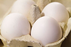 Fresh white eggs Stock Image