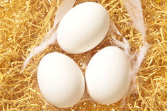 Fresh white eggs Royalty Free Stock Images