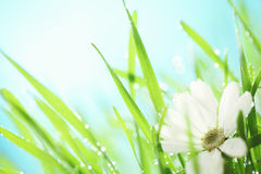 Fresh white flower in the grass Royalty Free Stock Images