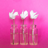 Fresh white flowers in small bottles on a pink background Stock Image