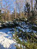 Snow on evergreen trees in forest Stock Images