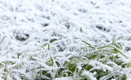 Fresh white frost covers green grass Royalty Free Stock Images
