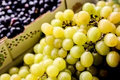fresh white grapes stock images
