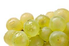 Fresh white grapes Stock Photos