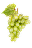 Fresh white grapes with leaves Stock Photos