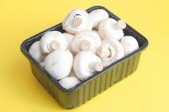 Fresh white Mushrooms Stock Images
