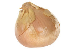 Fresh White Onion with Brown Skin On Royalty Free Stock Photos