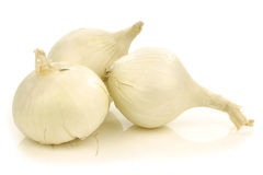 Fresh white onions Royalty Free Stock Photography