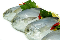 Fresh White Pomfret Stock Photography