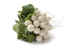 Fresh white Radish Stock Photos