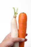 Fresh white radish and carrot solated on white background Stock Images