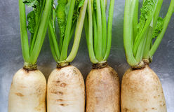 Fresh white radish. Radish is root vegetable has a lot of health Stock Image