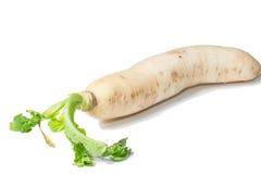Fresh white radish with slices Royalty Free Stock Photos