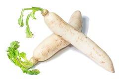 Fresh white radish with slices Stock Photography