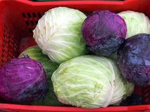 Fresh White and Red Cabbages, Greek Street Market Royalty Free Stock Photography