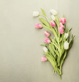 Fresh white and rose Tulips on gray wooden background with place for text Stock Photography
