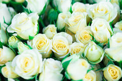 Fresh white roses with green leaves Stock Photography