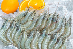 Fresh White shrimps Royalty Free Stock Photography