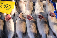 Fresh white snapper with red gill sale 150 baht per kilograms. In seafood market, Thailand Stock Photos