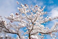 Fresh white snow fall at public park in winter season. At Kawaguchiko,Japan Royalty Free Stock Photo