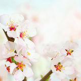 Soft spring flowers background Royalty Free Stock Image