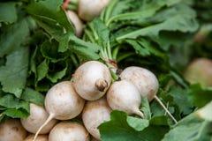 Fresh white turnip Stock Photo