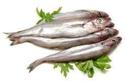 Fresh whiting Royalty Free Stock Photos