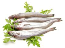 Fresh whiting Royalty Free Stock Image