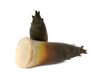 Fresh whole bamboo shoots on white Royalty Free Stock Photos