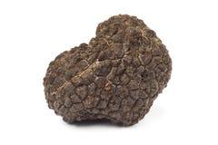 Fresh whole black truffle Royalty Free Stock Image