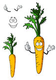 Fresh whole carrot vegetable Royalty Free Stock Photo